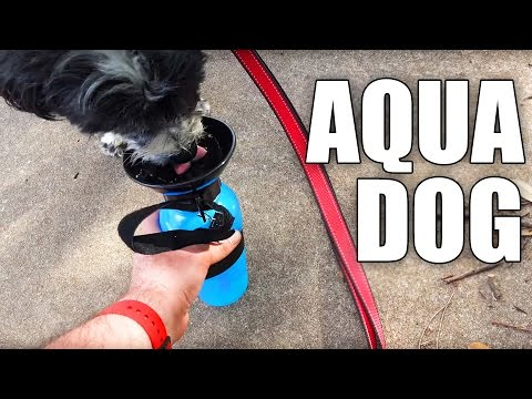 Aqua Dog Review- Water for Dog Walks | EpicReviewGuys CC