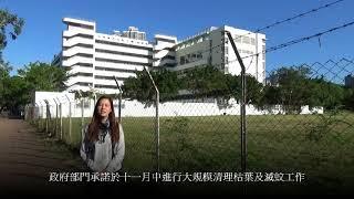 Publication Date: 2017-12-16 | Video Title: 海帆道草地最新蚊患情況.