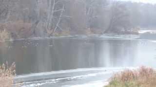Стая уток на реке Южный Буг ( Украина Николаевская область Первомайск)(, 2015-03-03T16:31:25.000Z)