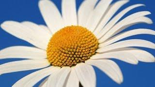💘Как Сделать Цветы Из Гофрированной Бумаги Ромашки Своими Руками Объемные Поделки Из Бумаги💘