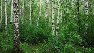 Природа Урала 2014 1