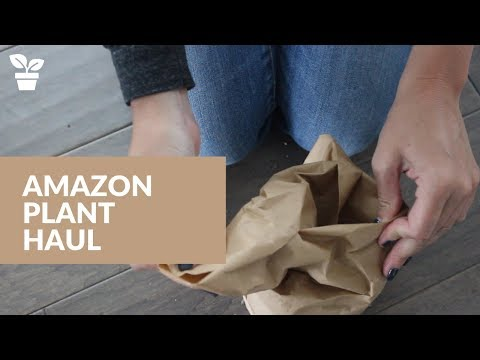 Amazon Plant Haul | Online Plant Buying | Amazon Houseplant Unboxing