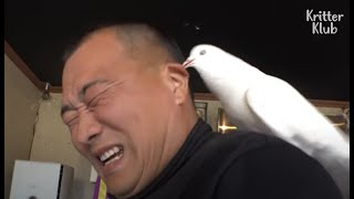 Pigeon Almost Got Killed During Training After 'This' Appeared..! (Part 2) | Kritter Klub