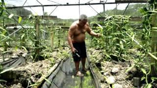 Hotu Vanilla 1 Production de Vanille de Tahiti