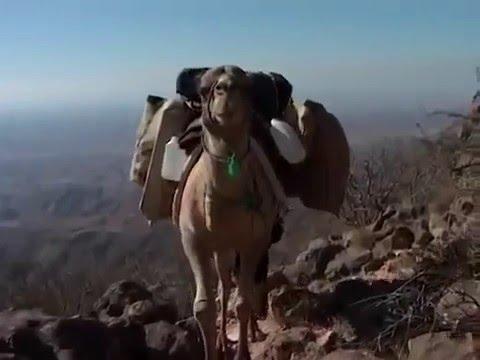 The Arabian Leopard Of Oman - Taiz Zoo Animal welfare