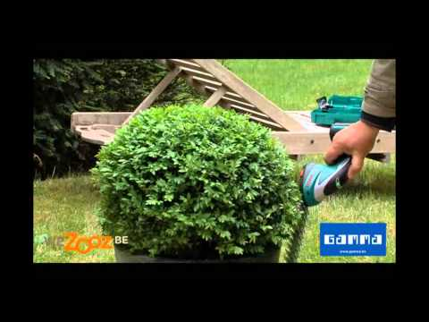 Tailler le buis rond vid o jardinage gamma belgique for Comment tailler un potiron