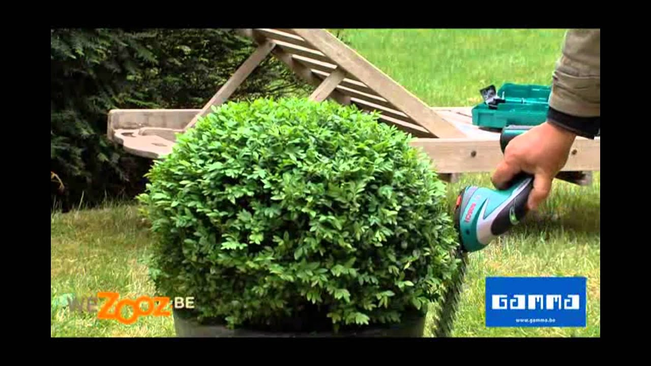 Tailler le buis rond vid o jardinage gamma belgique youtube - Taille du buis ...