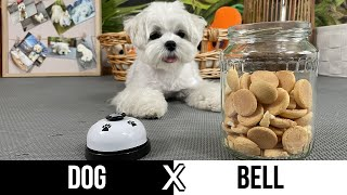 HOW TO TEACH A DOG TO RING A BELL  CUTE PUPPY CAN SHOW YOU