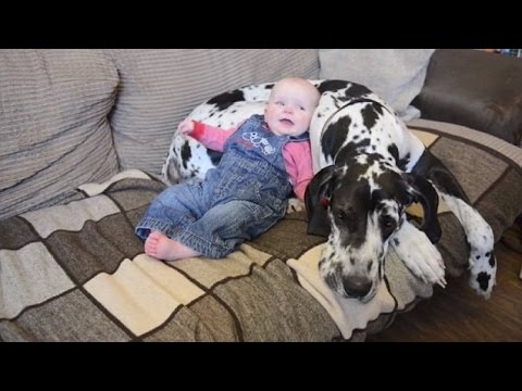 Big Dog Playing With Baby  Great Dane Dogs And Babies Play Together Videos Compilation  NEW HD