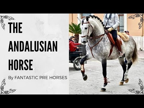 THE ANDALUSIAN HORSE - IBERIAN HORSE IN SPAIN