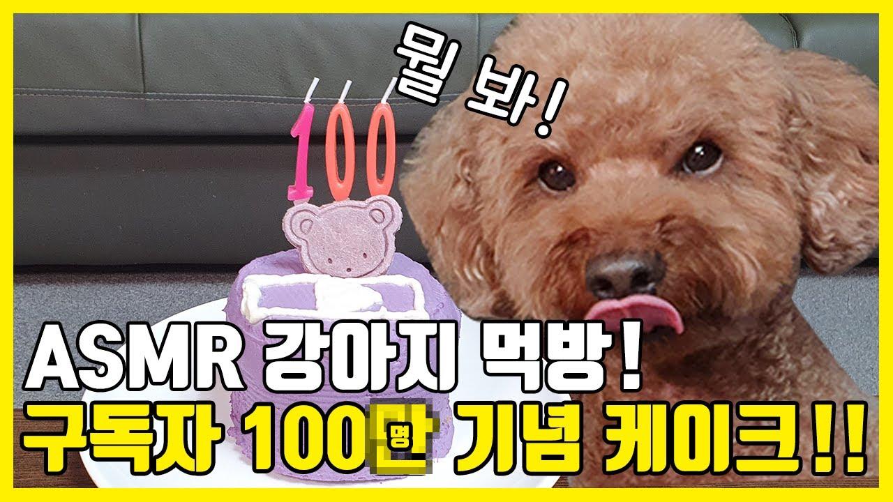 """""""희망"""" 구독자 100(만)명 기념 케이크 귀여운 강아지 먹방 / MUKBANG ASMR"""