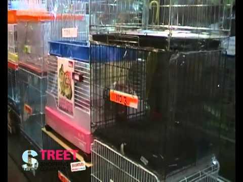 ร้านนริศ Pet Shop   จตุจักรพลาซ่าโซน D  ซอย 7