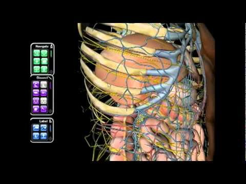 Netter Atlas de Anatomia Humana 3D - Saraiva.com.br - YouTube