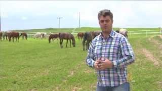 تربية الخيول العربية في مدينة إسكي شهير التركية