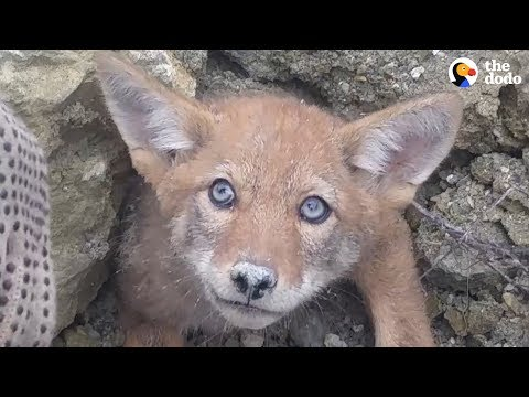 Maria Milito - Guys Help Free A Baby Coyote