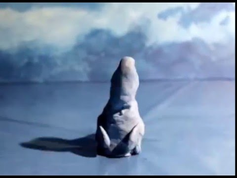 Dolphin Sound Effect 1
