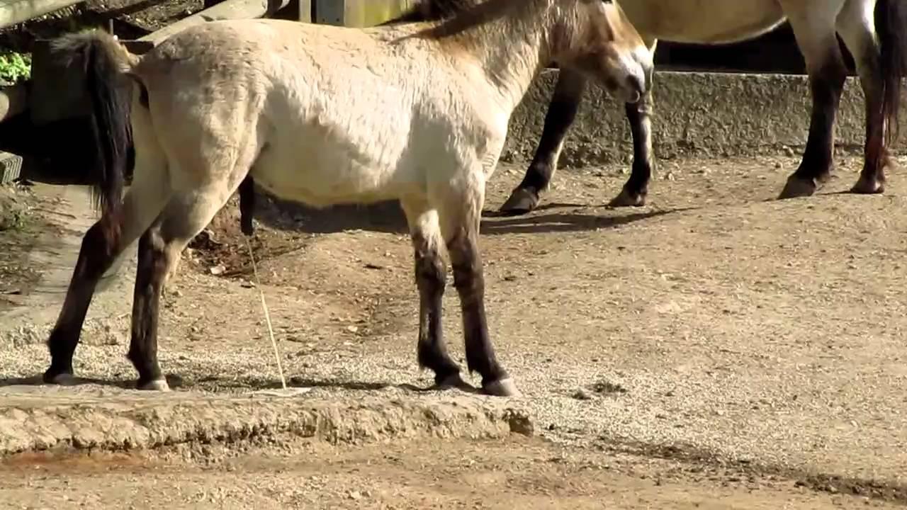 Horse Piss 1 - YouTube