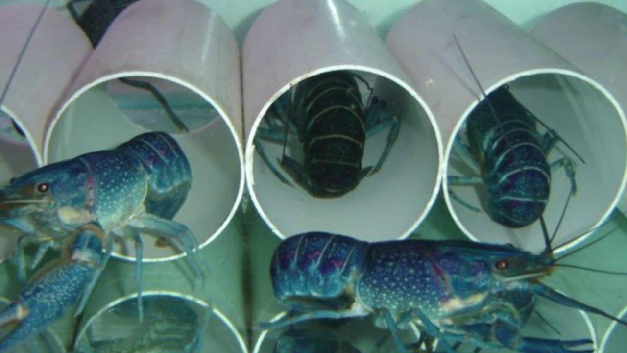 Бизнес выращивание в аквариуме 793