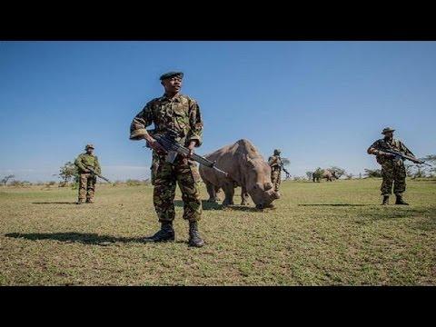 Two poachers killed in Kenyan national park: wildlife service