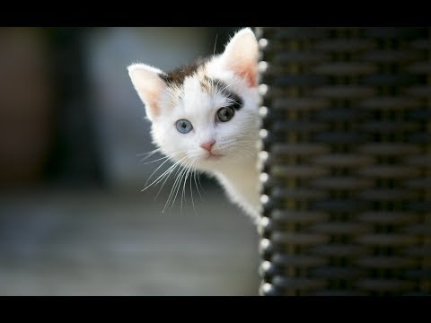 Cat Videos For Cats To Watch In 2019 Cute Cats Youtube