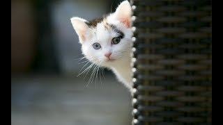 Super Cute Cat Images | Cute Cat and Kittens Photos [Cuteness Overloaded]