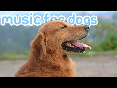OVER HALF A DAY Of Chill Music For Dogs! How To Relax Your Dog Music!