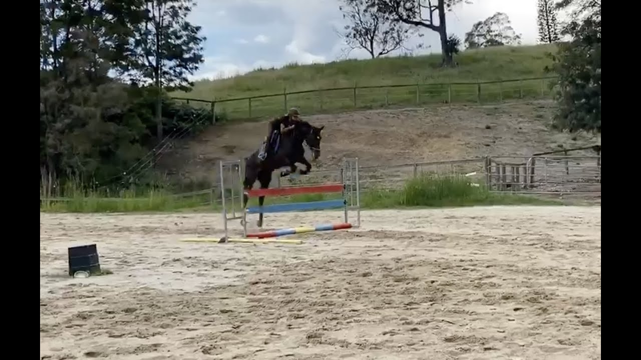 """FOR SALE """"Savvy"""" Warmblood Mare located Gold Coast Equestrian Centre"""