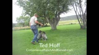 German Shorthaired Pointers Training