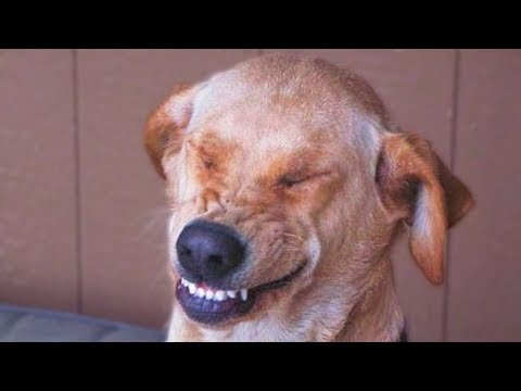 Funny Guilty Dogs Compilation NEW