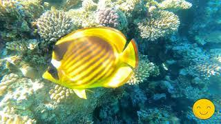 Обзор отеля Sultan Gardens ЕгипетШарм Эль Шейх сноркелинг вы не поверите сколько там всего под водой