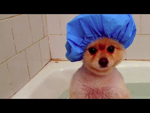 Cute Puppy Shower Compilation