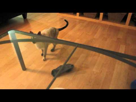 N2 the Talking Cat Bloopers – Kona blooper
