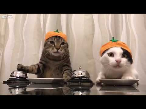 Jimmy Elliott - LOL: Two Cats Asking For Food Using Bells