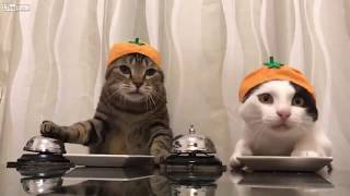 LOL: Two Cats Asking For Food Using Bells 🐱🐈🛎