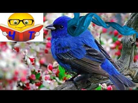 """Слухать """"Синій птах (переказ)"""" Метерлінк Моріс Аудіо Відео (українською)"""