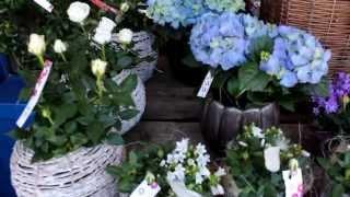Muttertag kann kommen! Gratis Blumenlieferung nach Bern