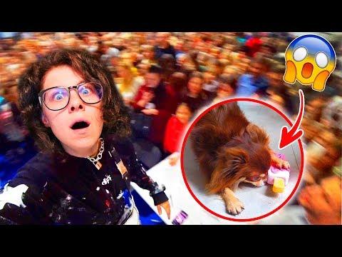 Что творит собака Миша пока я не дома?! Я в шоке! Что случилось на сходке? Выставка животных ВЛОГ