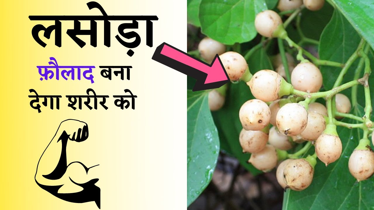 लहटोरा से वजन घटाएँ   pet kam karne ke tarike   health fitness tips in hindi   the jalebi