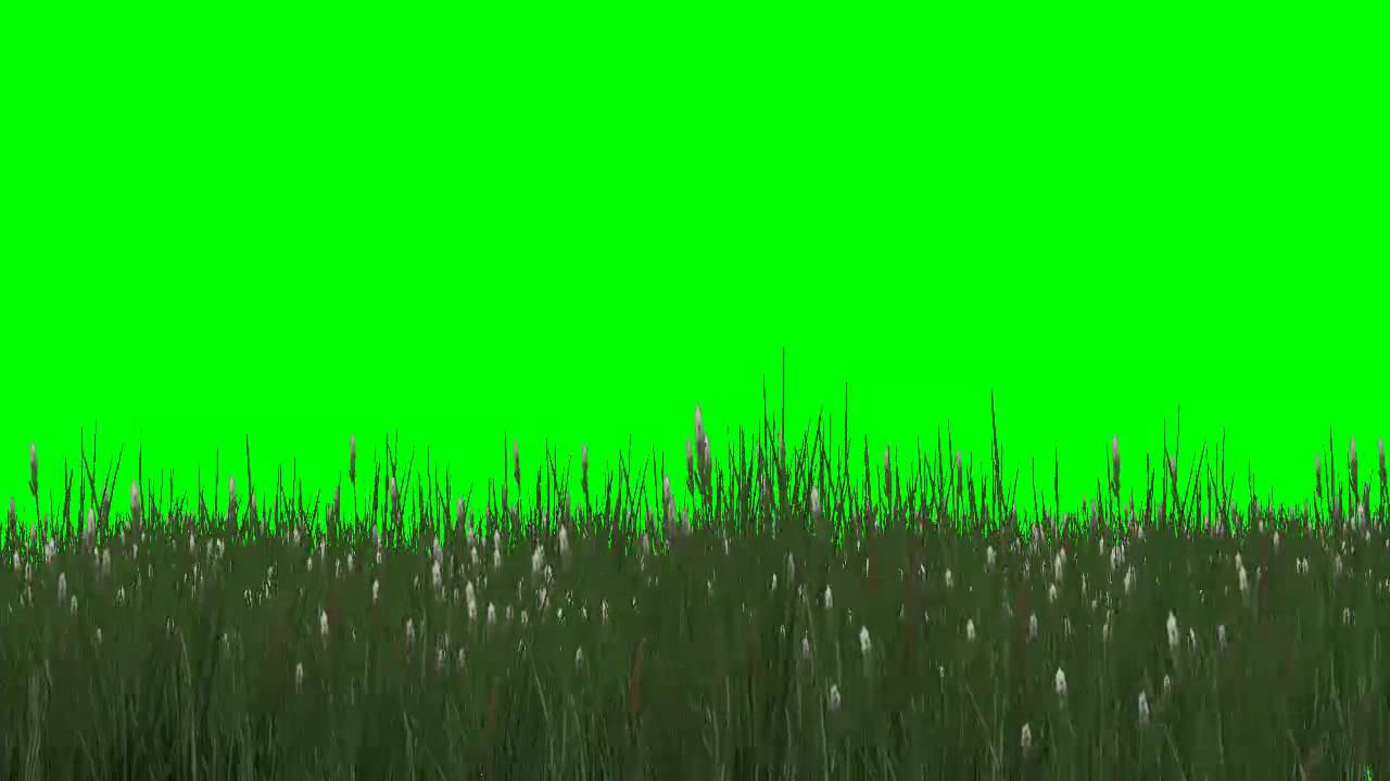 High Grass With White Flowers In The Wind Green Screen Effects