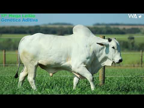 LOTE 103 - REM 10050 - 17º Mega Leilão Genética Aditiva 2020