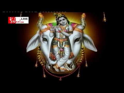 जय धरती माँ जय गों माता गूंज रहा हे मंत्र महान, PRAKASH MALI Hit Bhajan, Neelam Live 2016