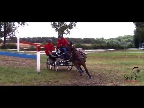 Stal Gendersteyn is going to the FEI World Single Horse Driving Championships! (Piber, Austria 2016)