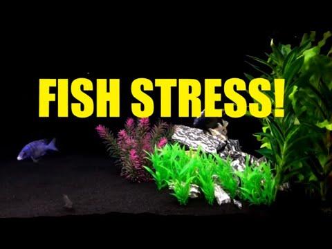 FISH STRESS!