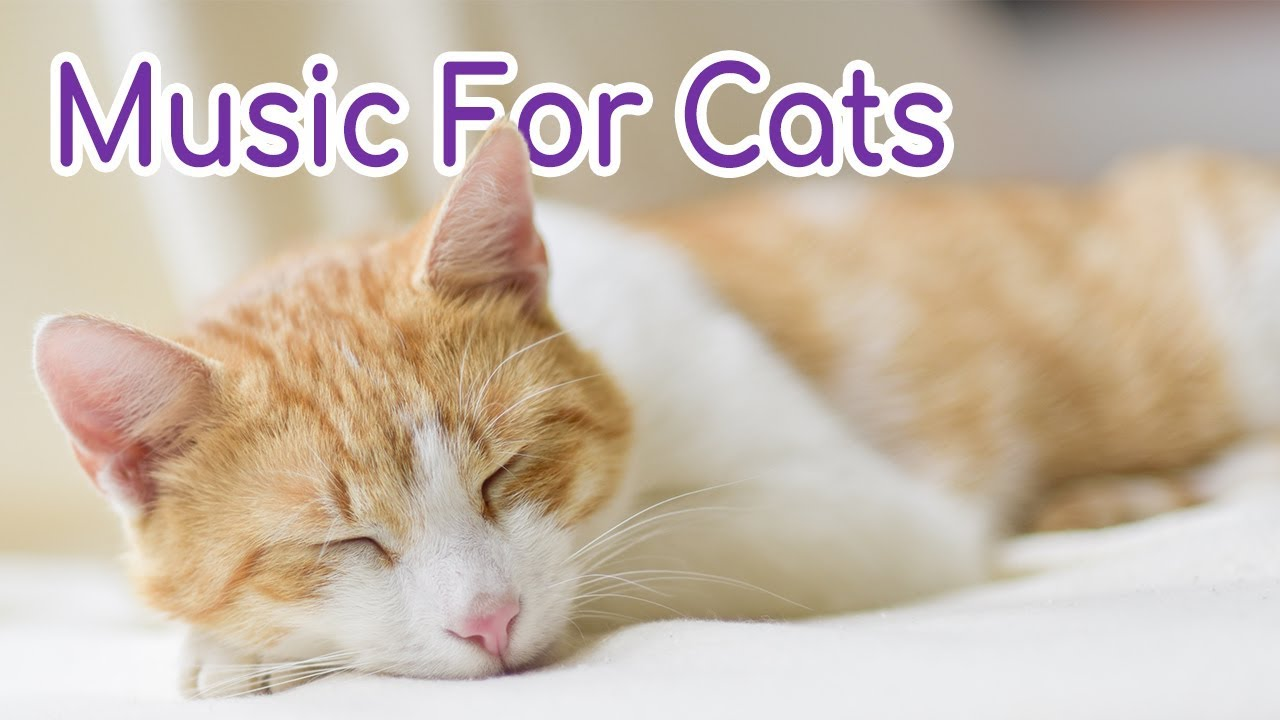 Music To Calm Your Cat 5 Hours Of Soothing Melodies Youtube