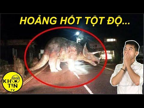 10 khoảnh khắc bất ngờ gặp khủng long ngoài đời khiến bạn hoảng hốt