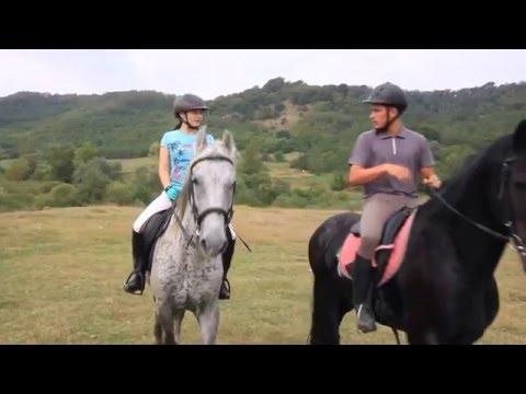 Marius Matache - Poem cu cai