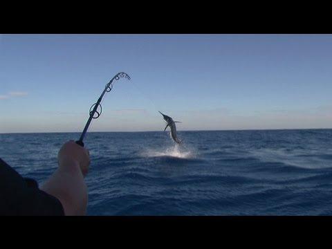 Black Marlin vs Stella - YouFishTV