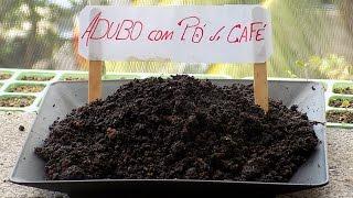 Como Fazer Adubo (com pó de Café)