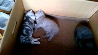 Самые милые котята (Часть 1) / Very sweet kittens (Part 1)