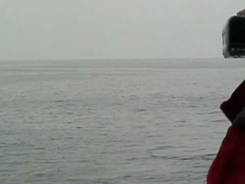 Capn Fishs Whale Watch Boothbay Harbor Maine
